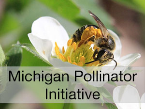 Michigan Pollinator Initiative