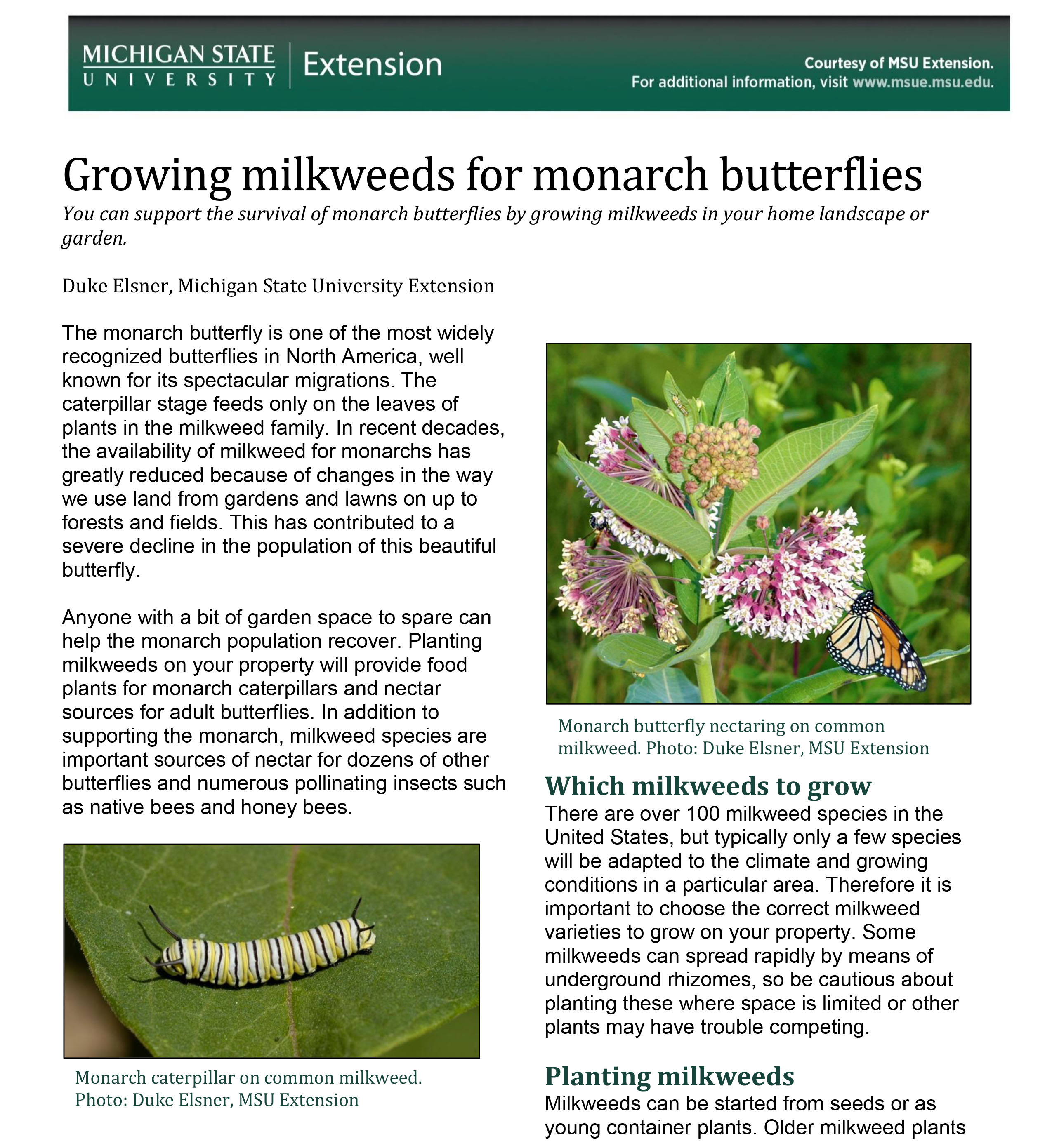 PDF cover of Growing Milkweeds for Monarch Butterflies