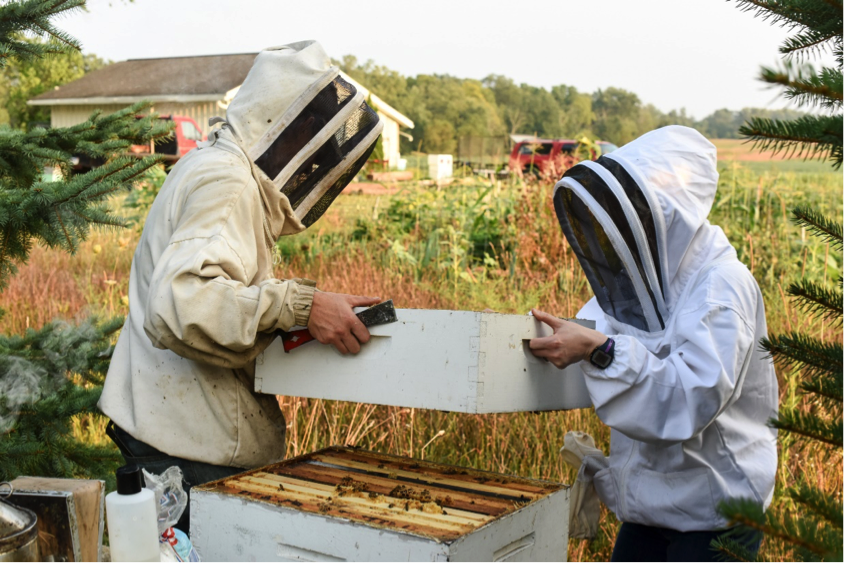 Beekeepers putting the colony back together
