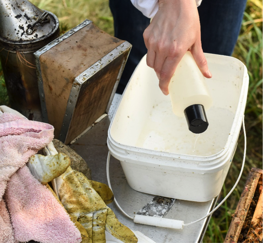 Beekeeper adding water to tub to dissolve sugar and expose mites