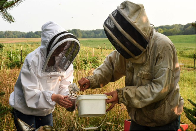 Beekeepers scooping bees from bucket