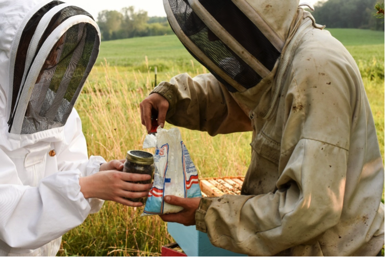 Beekeepers adding powdered sugar to jar of bees