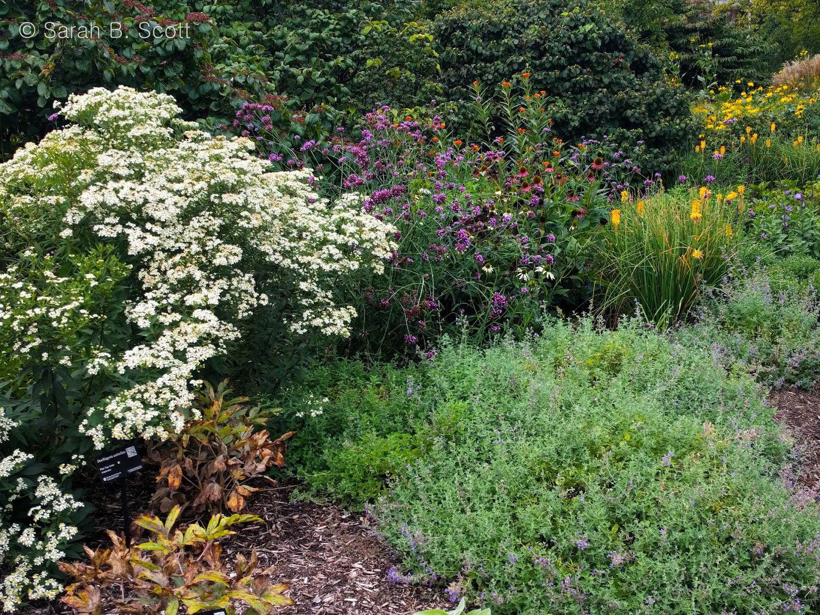 Pollinator Gardens - Michigan Pollinator Initiative on native plant garden, native wildflower garden, native perennial garden, native bee habitat,