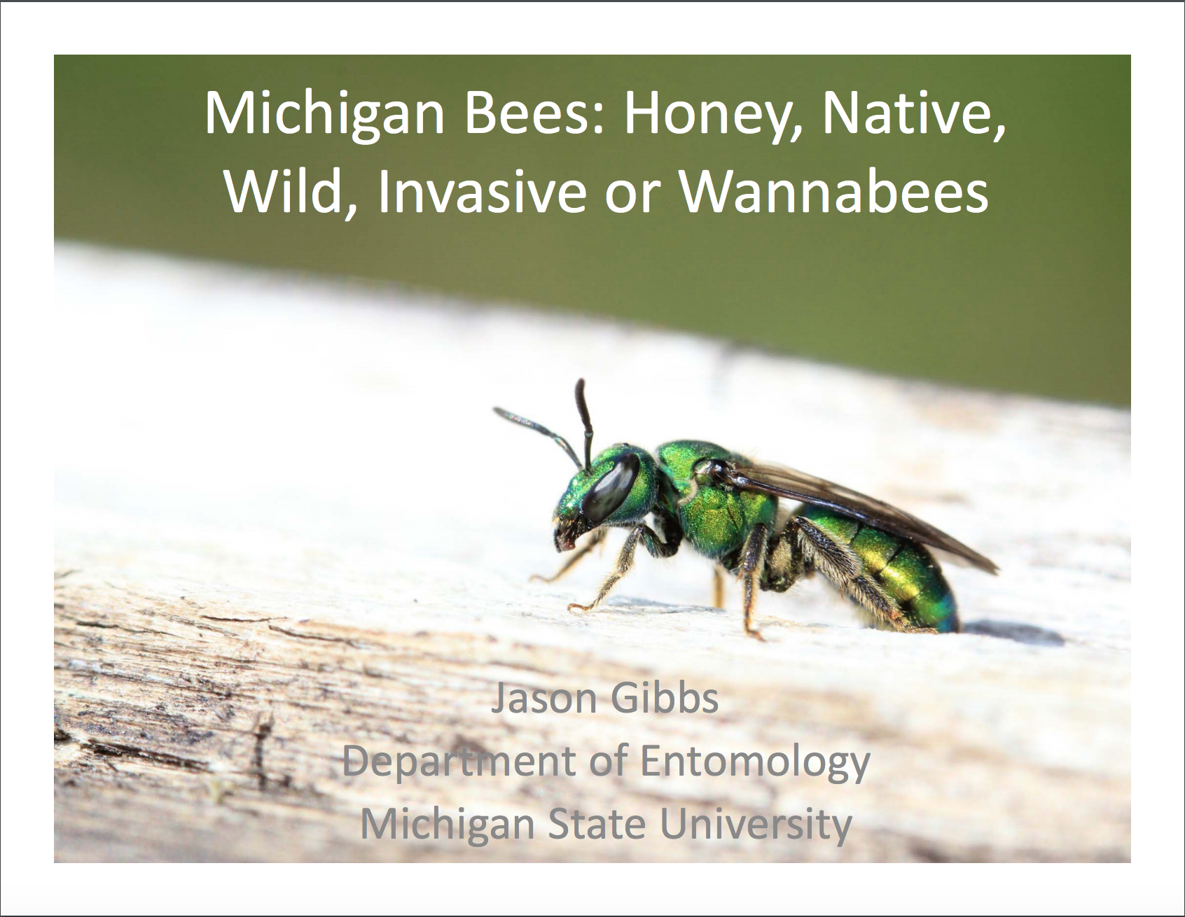 PDF cover of Michigan Bees