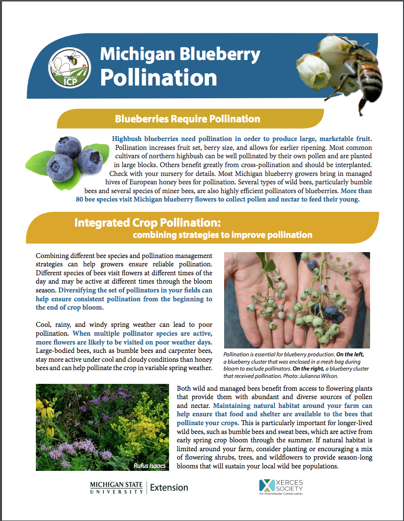 PDF cover of MI Blueberry Pollination