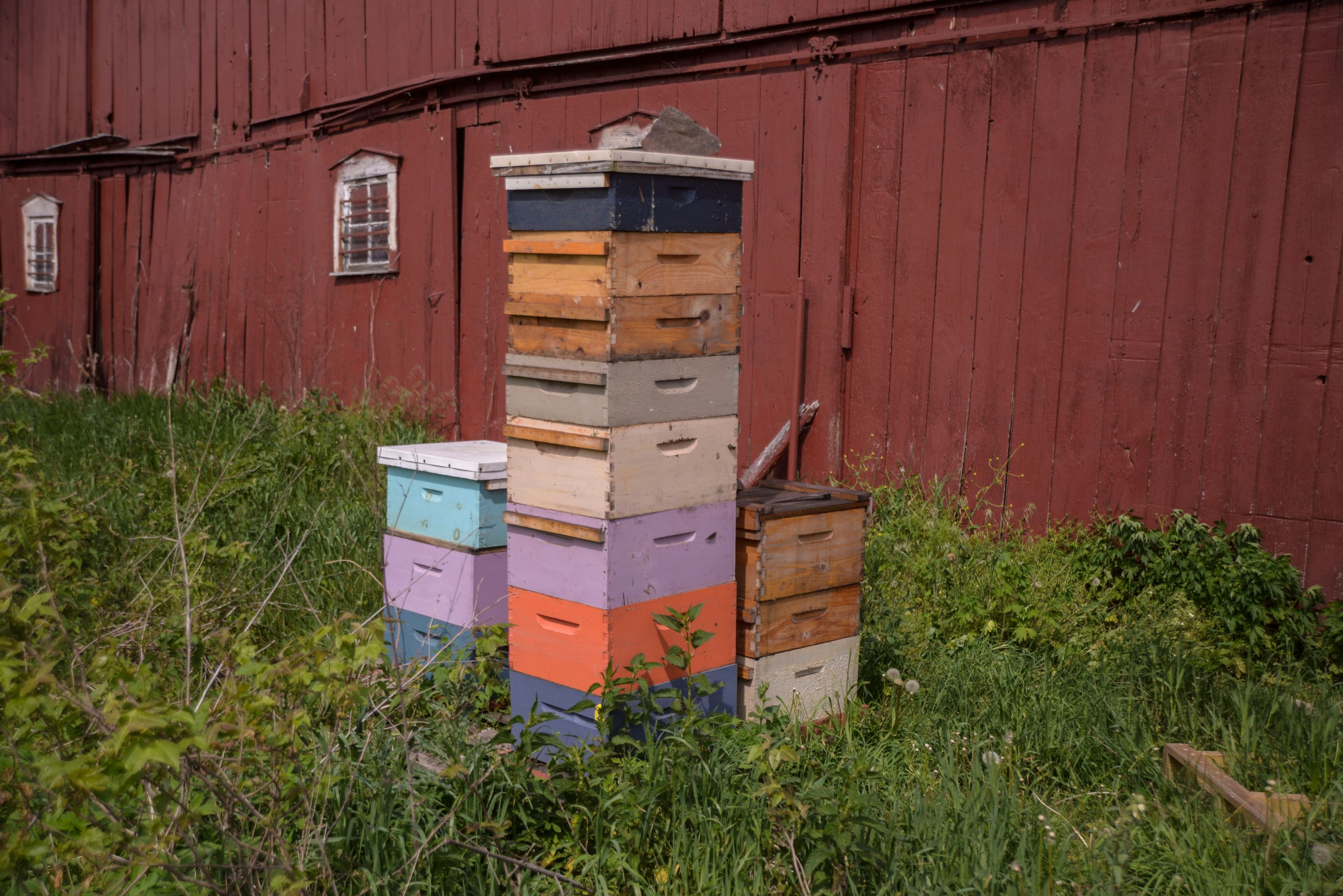 hives with AFB