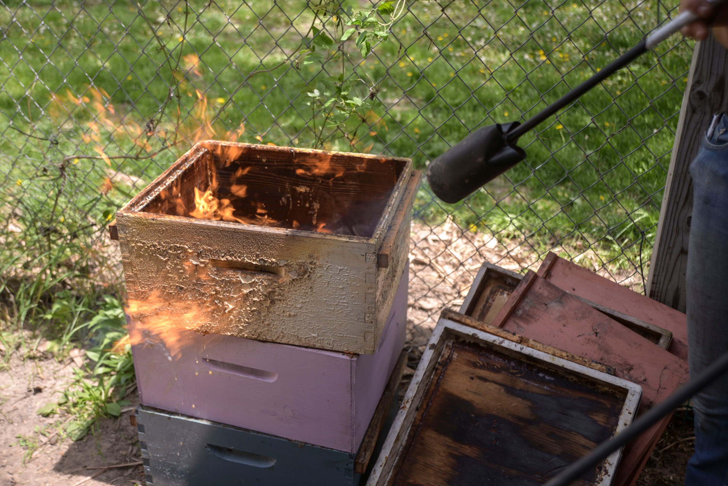 Scorching bee boxes with a torch