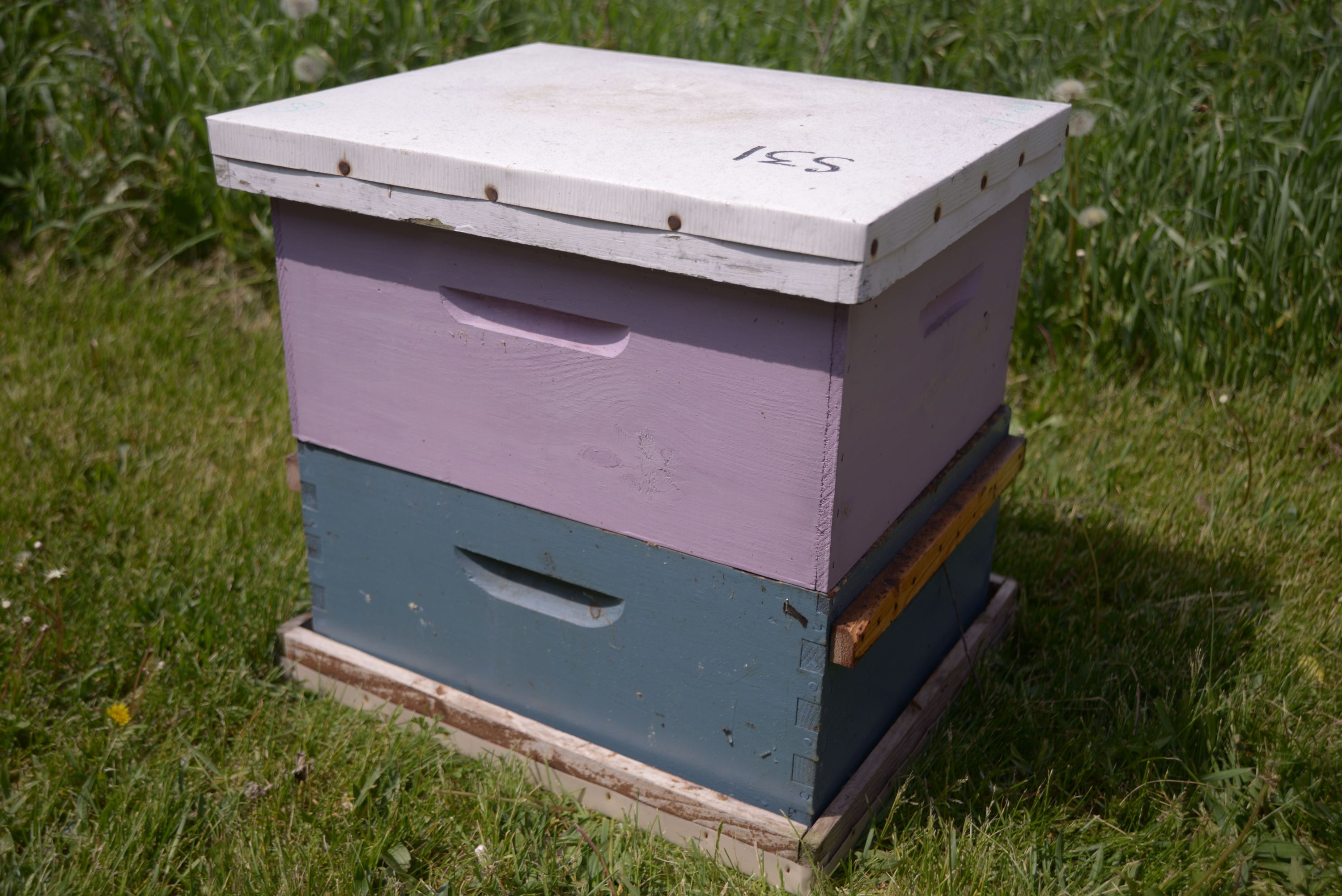 Tightly closed bee boxes